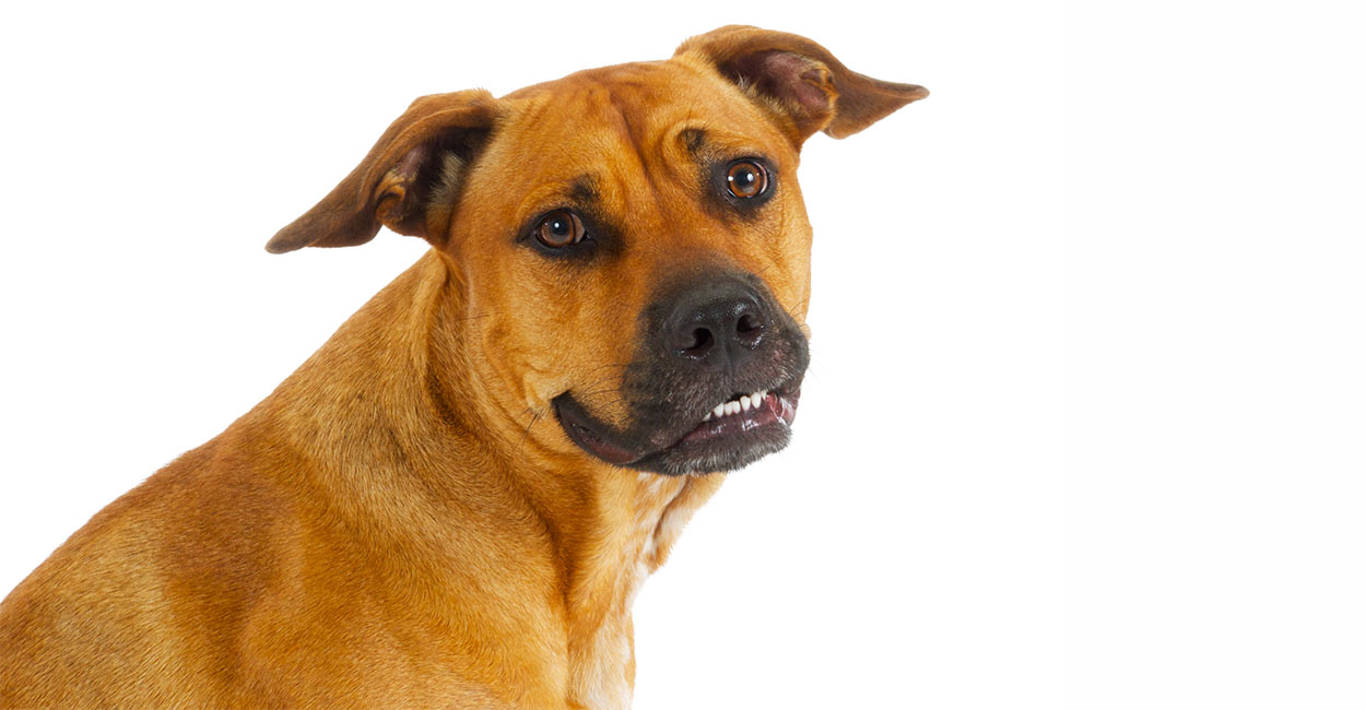 cute black mouth cur