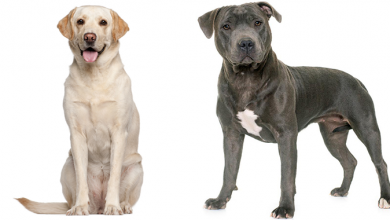 Photo of Labrador Terrier Mix: Complete Dog Breed Guide