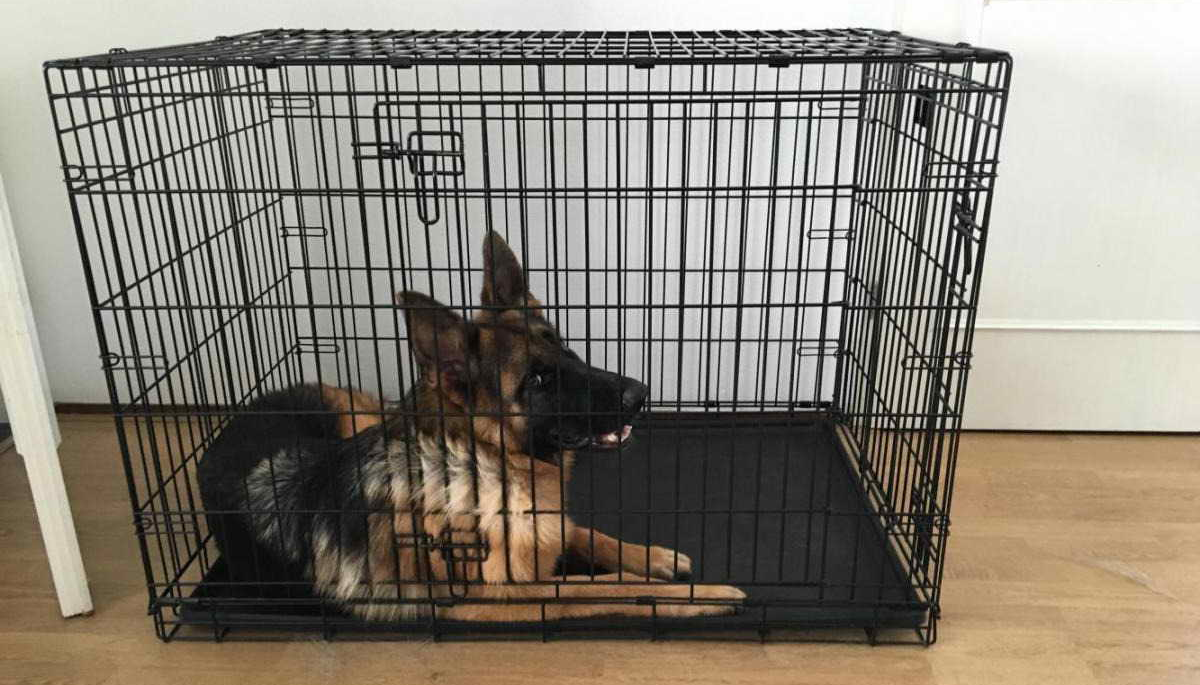 german shepherd in crate